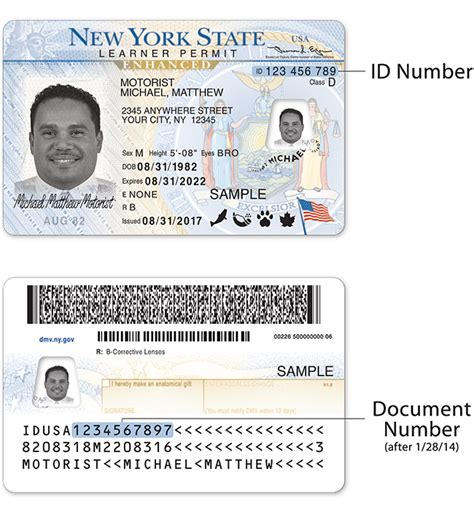 New York Drivers License Document Number
