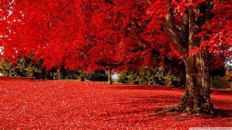 red hd wallpapers p wallpapersafari