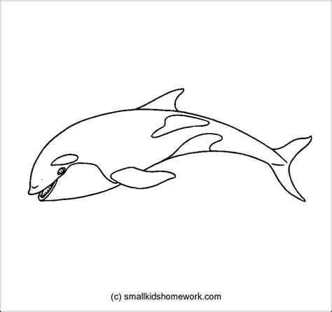 whale outline coloring page killer whale outline picture archives smallkidshomework com