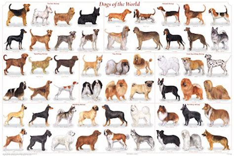 how many breeds of dogs are there dogsforlife breeds of dogs