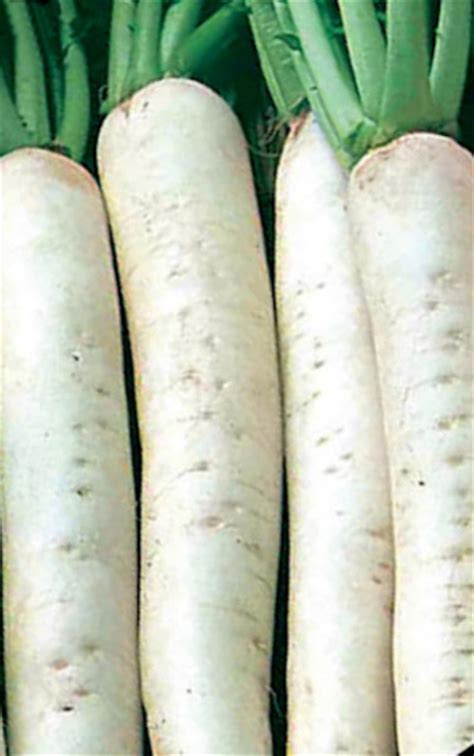 large root vegetables the vegetable seed store root vegetable seeds