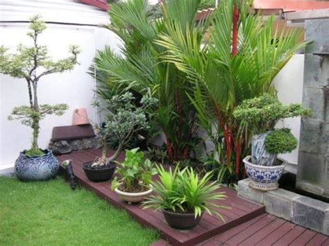 Lu Hias Untuk Taman pohon hias palem cocok untuk taman rumah minimalis