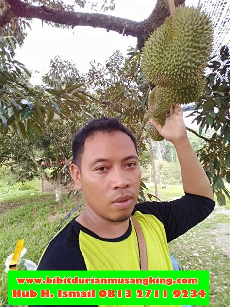 Bibit Durian Bawor Jakarta durian bawor bibit durian montong bibit durian unggul