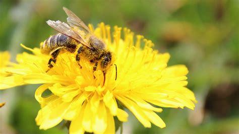 alimenti antistaminici naturali allergie di primavera guida ai rimedi naturali anti polline