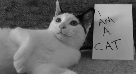 Set Ami Cat i am a cat