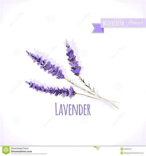 watercolor tattoo lavender vector watercolor lavender stock vector image 55369194