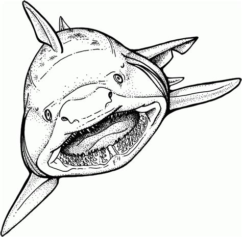 free coloring page of a shark free printable shark coloring pages for kids