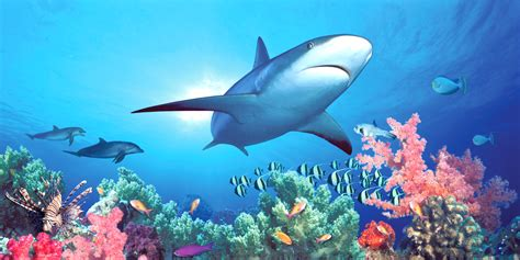 shark wall murals shark reef get biggies