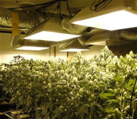 california marijuana grow houses busted  federal raid