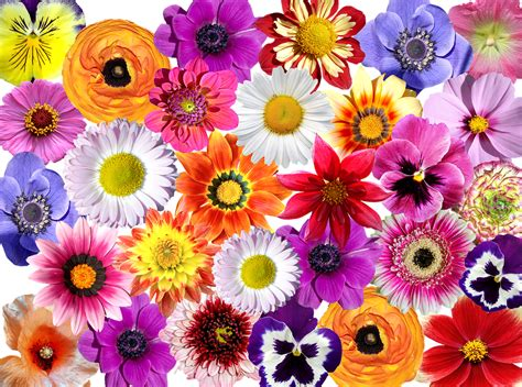 bunte blumen flowers flower colorful 183 free photo on pixabay