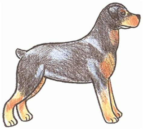how to draw a rottweiler guide how to draw a rottweiler