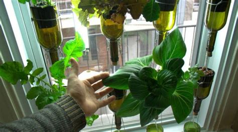 vertical hydroponic window garden from biocity news