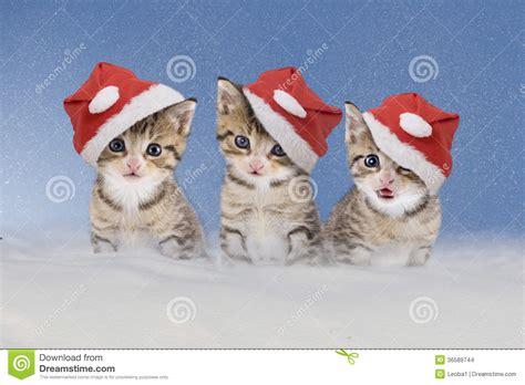 imagenes navidad gatitos tres gatitos con los sombreros de la navidad que se