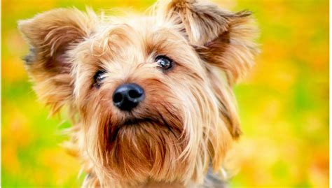 best breeds for living your best with dogs autos post