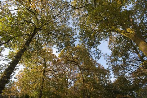 What Is A Tree Canopy Tree Canopy In Autumn 3985 Stockarch Free Stock Photos