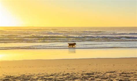 friendly beaches california beaches in california californiabeaches