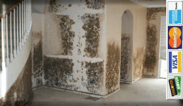 home decor pembroke pines how to take mold of 28 images how to get rid of black 100 century mold removal pembroke pines florida insurance billing free estimates miramar on mold removal