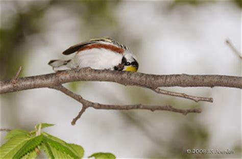 jerry s birding digiscoping blog do birds sleep 02