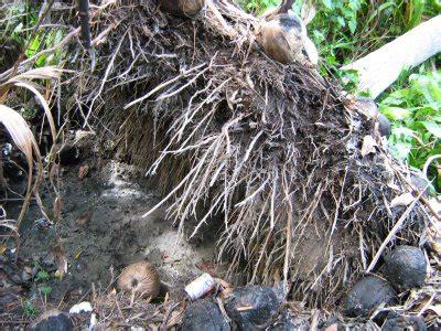 tugas bahasa indonesia laporan pengelompokan tumbuhan