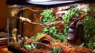 ball python terrarium d 233 cor ideas scalies pinterest