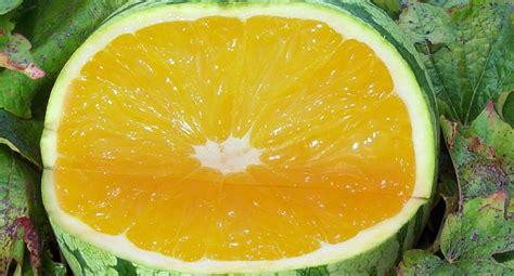 Tanaman Jadi Buah Sawo Duren Kenitu resep house buah buahan dan tanaman unik