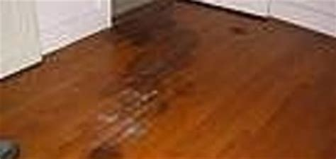 urine soaked into hardwood floor 1000 images about pet issues on carpets