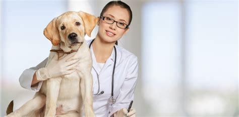 imagenes de medicas veterinarias veterinaria
