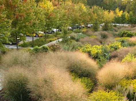 Landscape Architecture Cornell 158 Best Images About Stormwater Swales Channels And