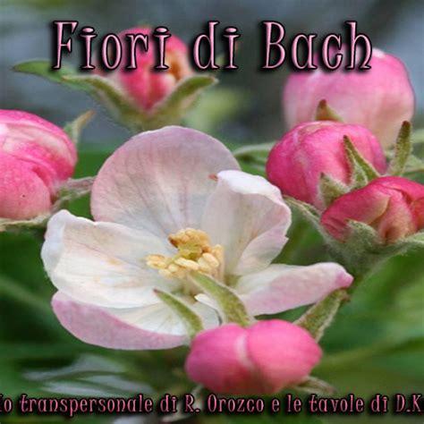 fiori di bach floriterapia di bach orozco e tavole di kramer
