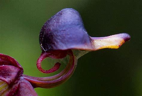foto di fiori strani le foto dei fiori pi 249 strani curiosi improbabili focus it