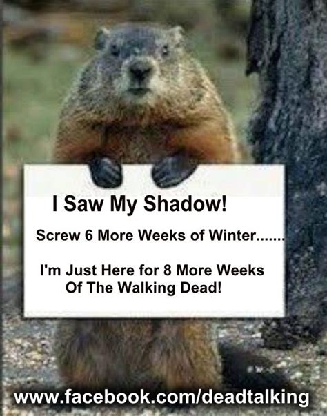 groundhog day driving 72 best images about groundhogs day on