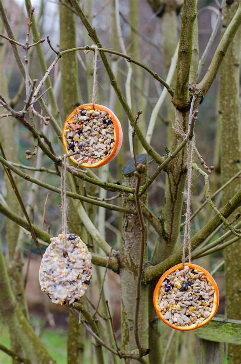 how to your bird how to make bird feeders growing family