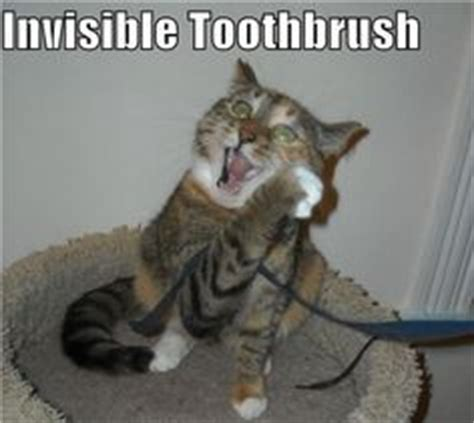 Invisible Cereal Meme - invisible on pinterest cats cats humor and funny cat