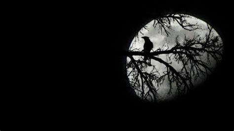 wallpaper gagak hitam der vogel und der mond hd desktop hintergrund breitbild