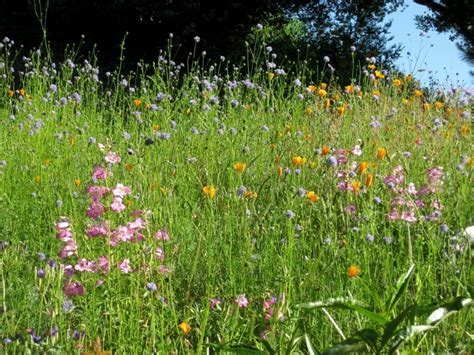 notes from the meadow user friendly deer resistant plant september time to plan a native ca meadow sierra
