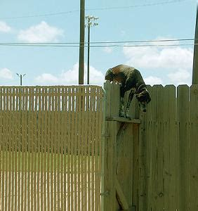 how to keep dog from jumping fence stop fence jumping and escaping for all dogs and puppies