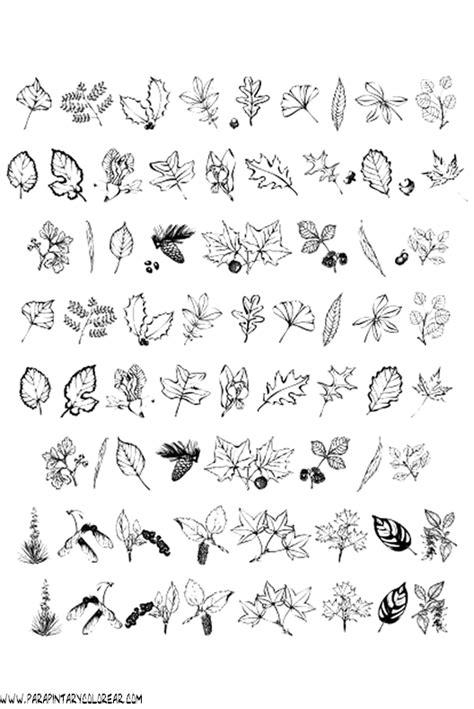 imagenes otoñales hd ramas de rboles para colorear im genes para colorear