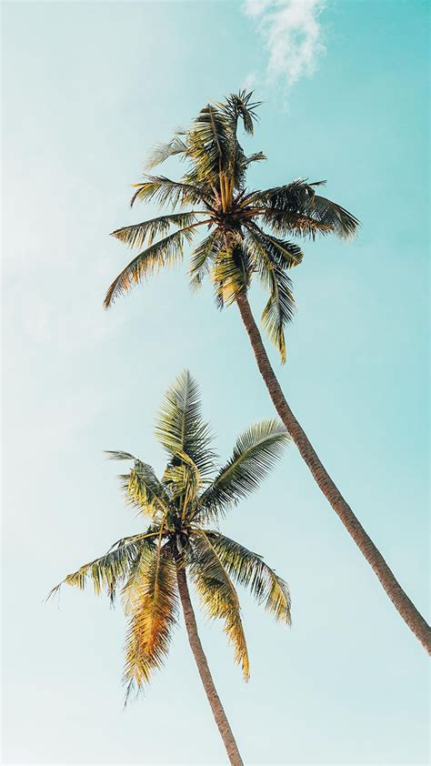 Live Palm Tree Wallpaper by Let S Go Coconuts Enjoy 10 Tropical Iphone Wallpapers