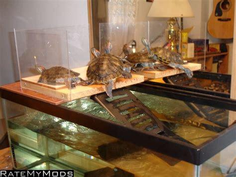 aquarium habitat design turtle dock design turtle pinterest turtles and design
