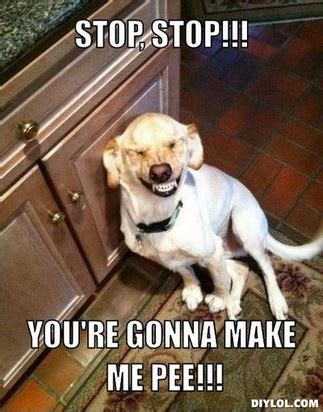 can dogs laugh can dogs laugh