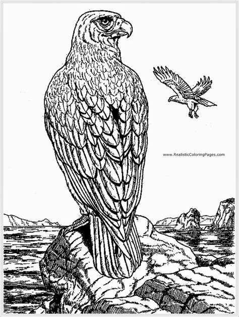 realistic eagle coloring pages harpy eagle coloring pages