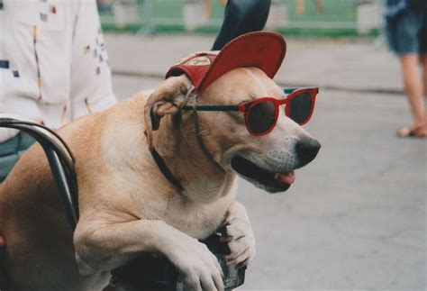 Search Mit File Hund Mit Brille Jpg Wikimedia Commons
