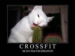 Pussy Cat Meme - don t be a pussy cat outpost crossfit