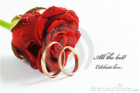 red rose  wedding ring stock image image