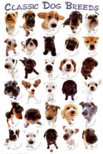 types of dogs my top collection all types of dogs