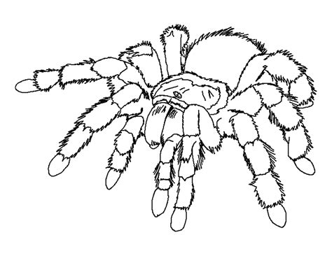 Coloring Pages Spiders free printable spider coloring pages for