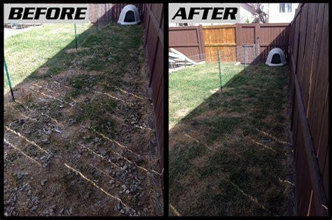 dog poop backyard pet dog waste removal and pooper scooper services poooh