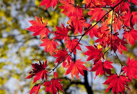 Herbstlaub Garten by Laub Verwerten Und Entsorgen Herbstlaub Im Garten