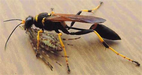 formiche volanti come eliminarle nico valerio animali in casa vespa vasaio ama i libri
