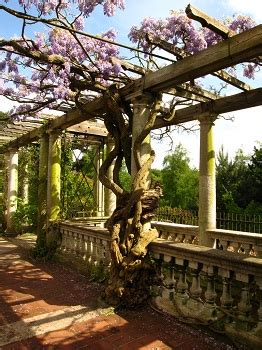 pergola definition construction types examples